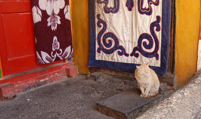 Кот в монастыре Дрепунг