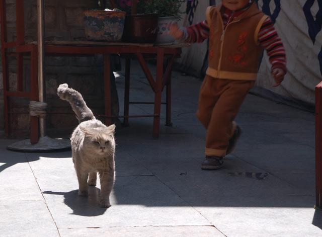 Кот в женском монастыре Лхасы