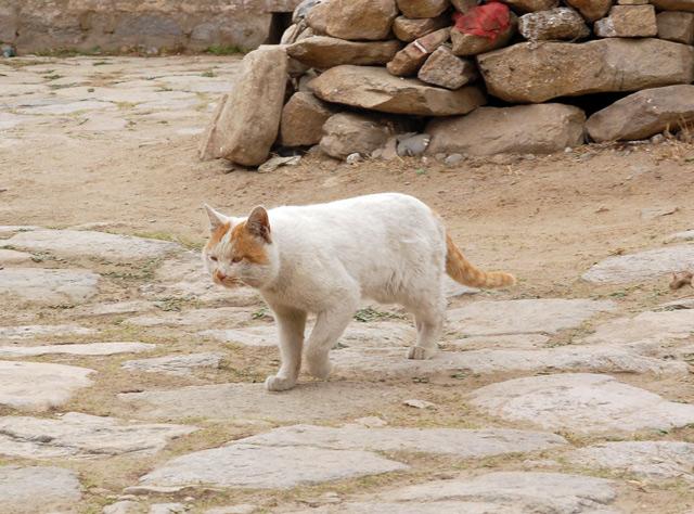Кот в монастыре Сера