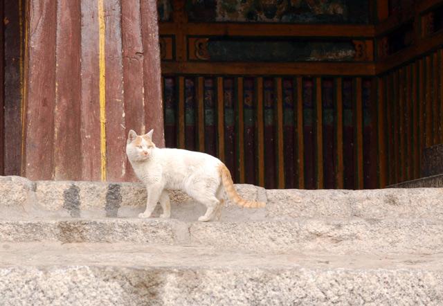 Тот же кот доказывает, что это его монастырь -- метит колонны главного храма.