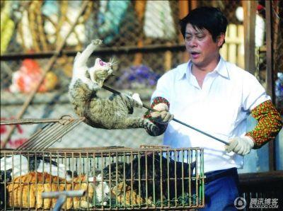 Живых кошек в пищу продают на рынке в Гуанчжоу