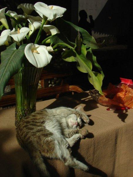 Юньнаньская кошь