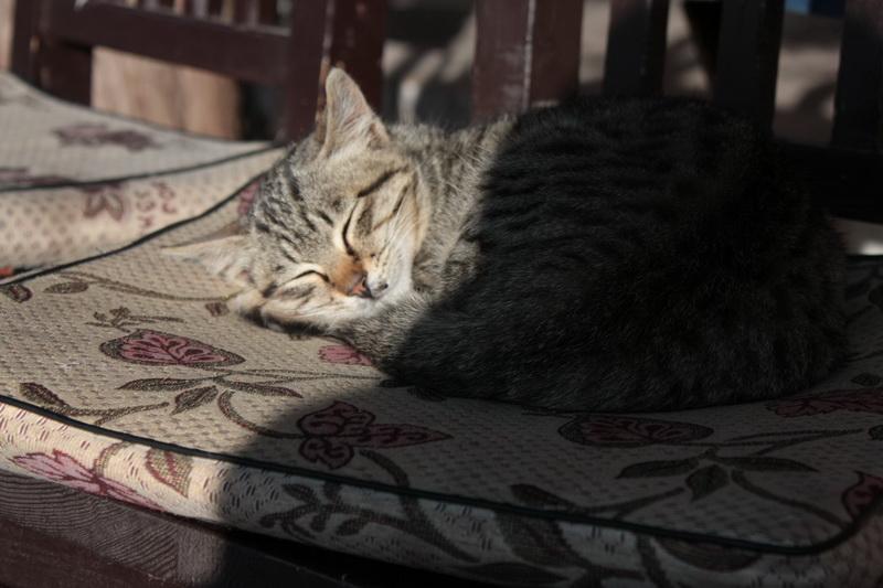 Лицзянская кошечка