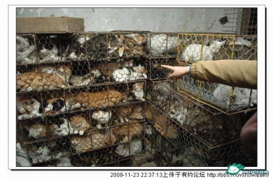 Фото: Около тысячи котов спасены в Китае