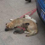 Уханьские собаки / Китай / Магазета