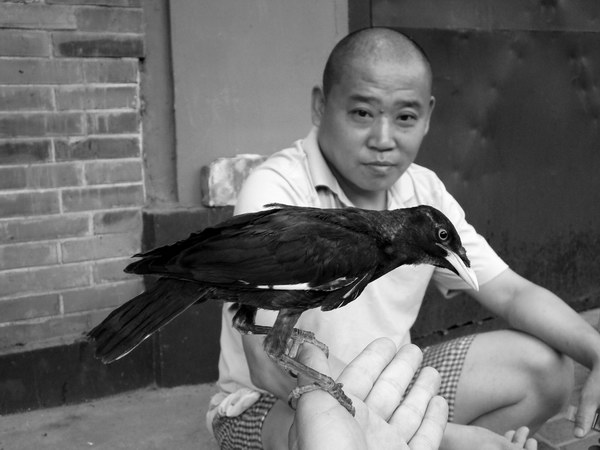 Птица и человек