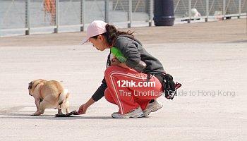 «Собачий вопрос» по-гонгконгски