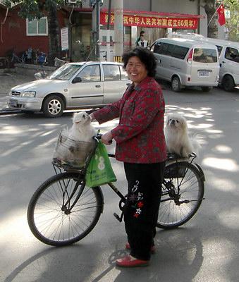 болонки-близняшки и их хозяйка. Пекин, октябрь 2009. Наталья Григорьева