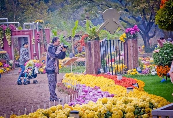 Миллион Хризантем: Фотоотчет из Ханчжоу / Магазета