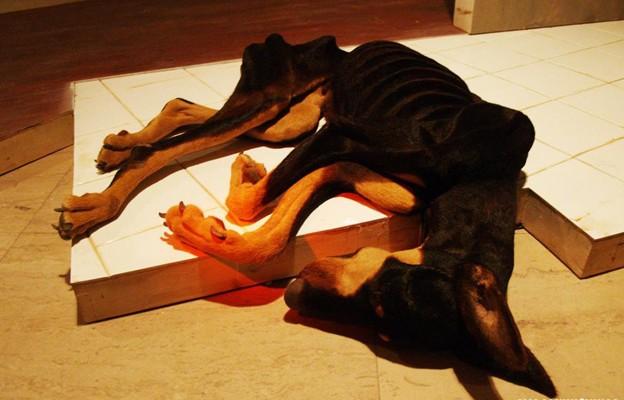 """""""Голодная собака"""", Мо Боянь, инсталляция, 2010"""