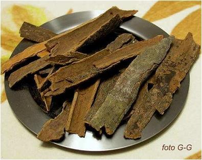Кора кассии – коричного китайского дерева