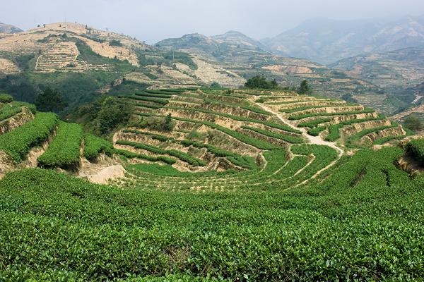 Ландшафтный дизайн в стиле улун / Фотографии Китая в Магазете
