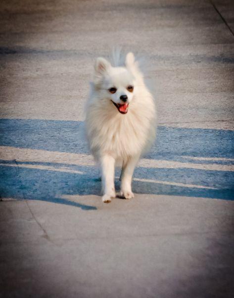 Собаки в Китае: фото-факты / Магазета