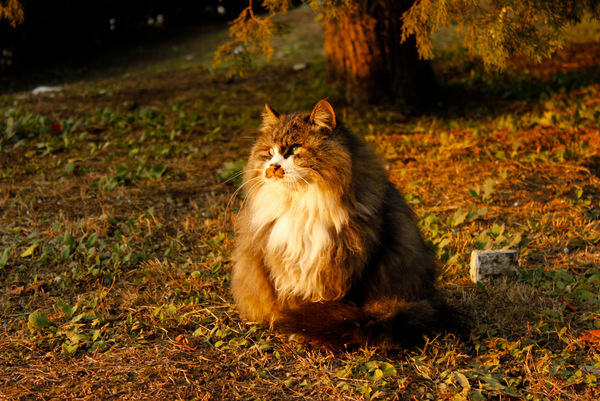 http://magazeta.com/wp-content/uploads/2012/11/9-_MG_9259.jpg