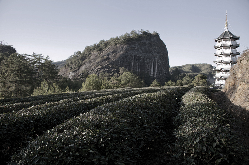 wuyi mountains 7