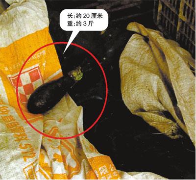 На рыбном рынке в Китае нашли бомбу второй мировой внутри кальмара