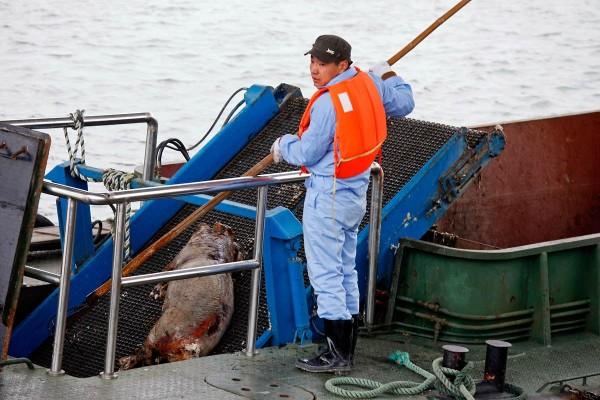 Подборка материалов: В шанхайской реке найдено около 3000 трупов свиней