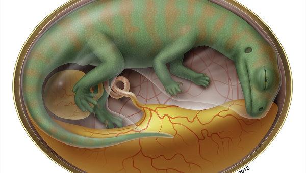 """Палеонтологи нашли в Китае """"кладбище"""" древнейших зародышей динозавров"""