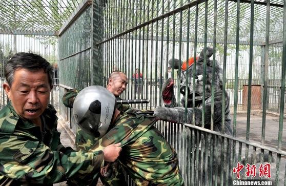 Работники китайского зоопарка учатся ловить животных на своих коллега