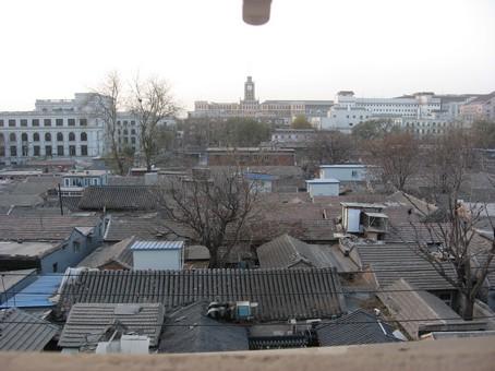 Пекин посконный.