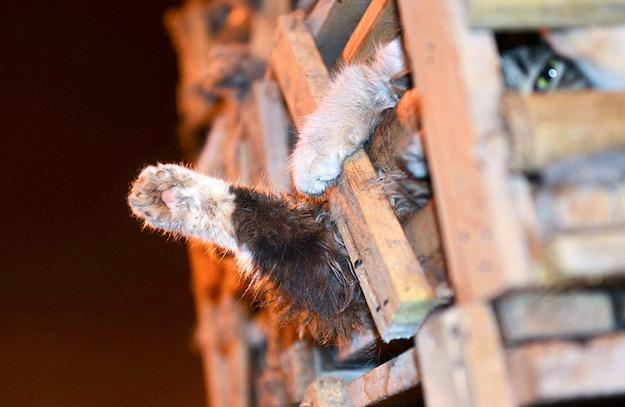 В Китае добровольцы спасают кошек, которых хотели превратить в «деликатес»