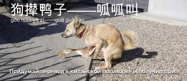 Китайская поговорка сехоуюй 狗撵鸭子——呱呱叫