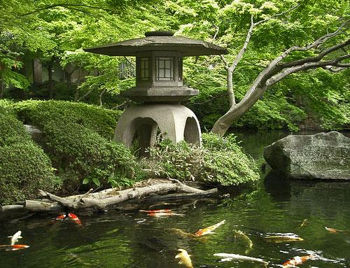 Кои в пруду в традиционном японском саду