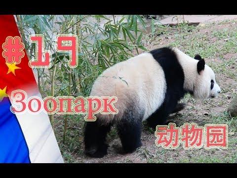 """Видеоблог """"Made in China"""". Гуанчжоуский зоопарк"""