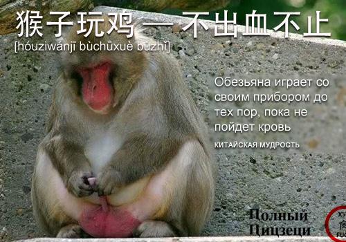 猴子玩鸡 —— 不出血不止