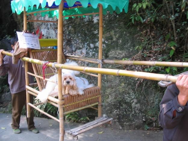 Китайская поговорка 狗坐轿子——不识抬举