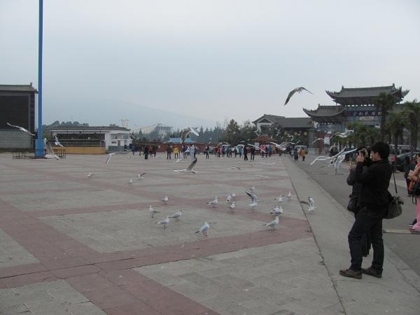 kunming (3)