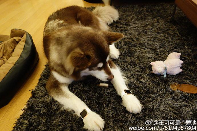 Ван Сыцун и его собака