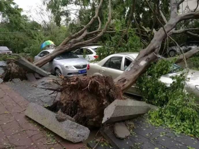 typhoon-33