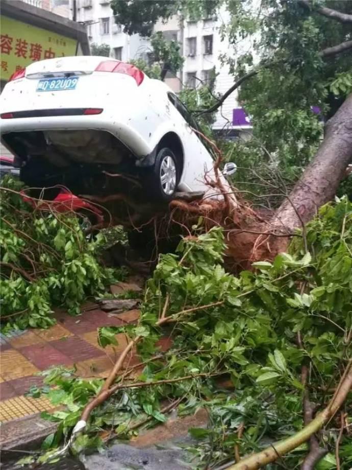 typhoon-42