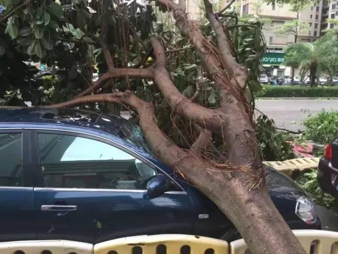 typhoon-43