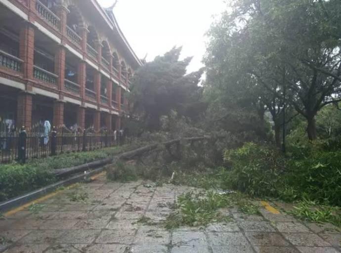 typhoon-44