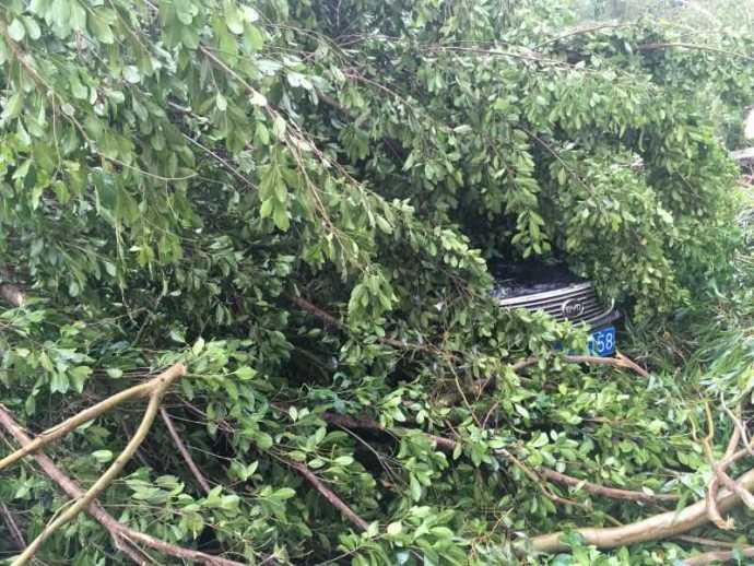 typhoon-8