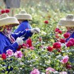 Работницы народности Ли