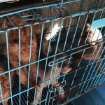 В Гонконге спасли сотню собак из незаконного питомника