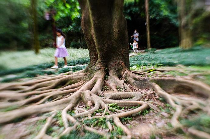 деревья китай