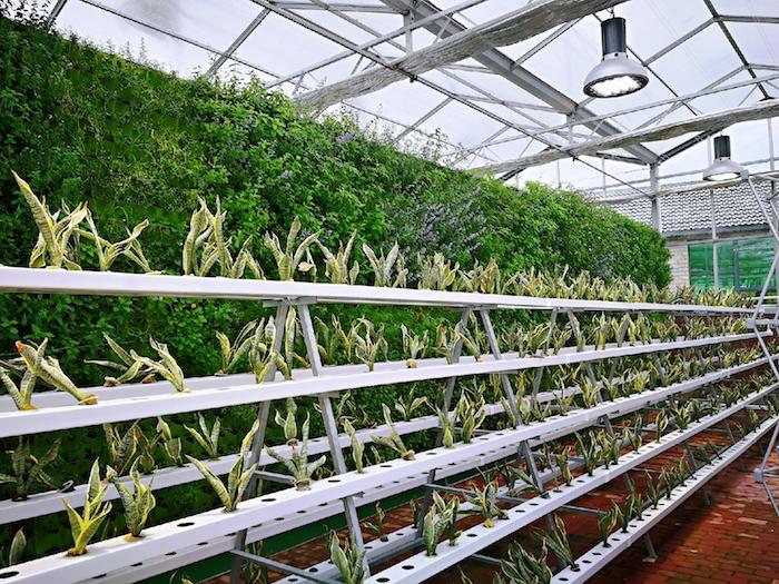 В парнике выращивают цветы и лечебные травы