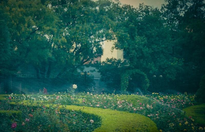 Клумбы в бывшем Французском парке. Источник: Катя Князева