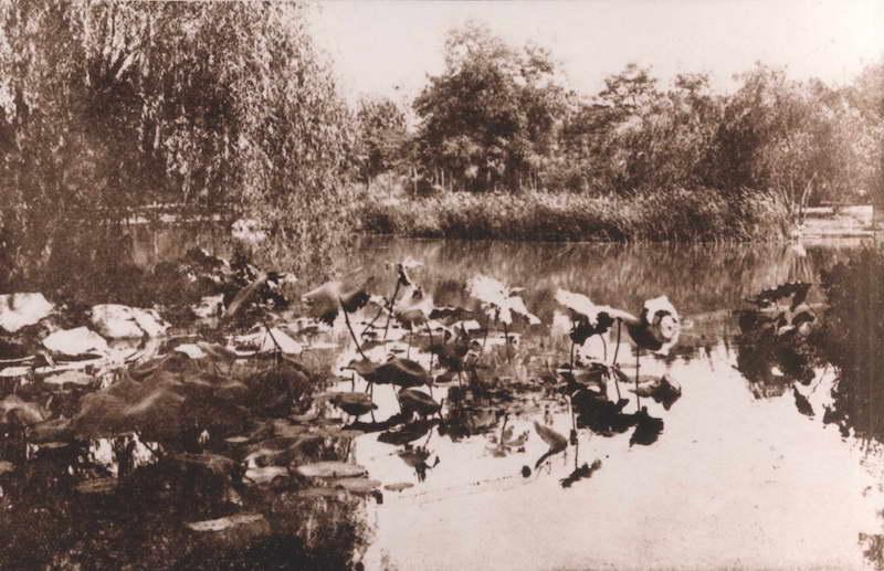 Кувшинки в пруду. Источник: В. Д. Жиганов Русские в Шанхае
