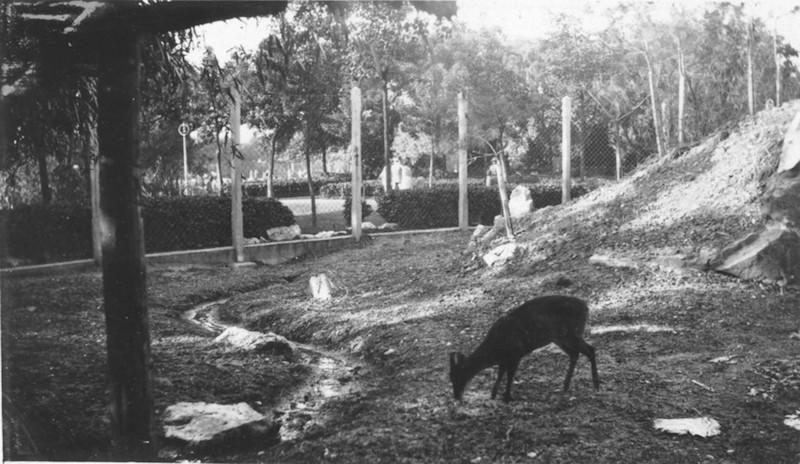 Загон с оленями впоследствии превратился в маленький зоопарк. Источник: Virtual Shanghai