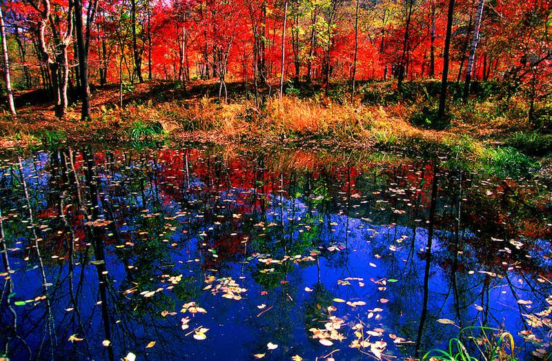 Ущелье красных листьев. Источник: 吉林拉法山国家森林公园