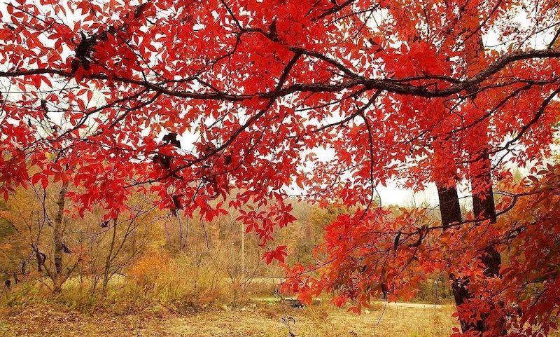 Ущелье красных листьев. Источник: 搜狐