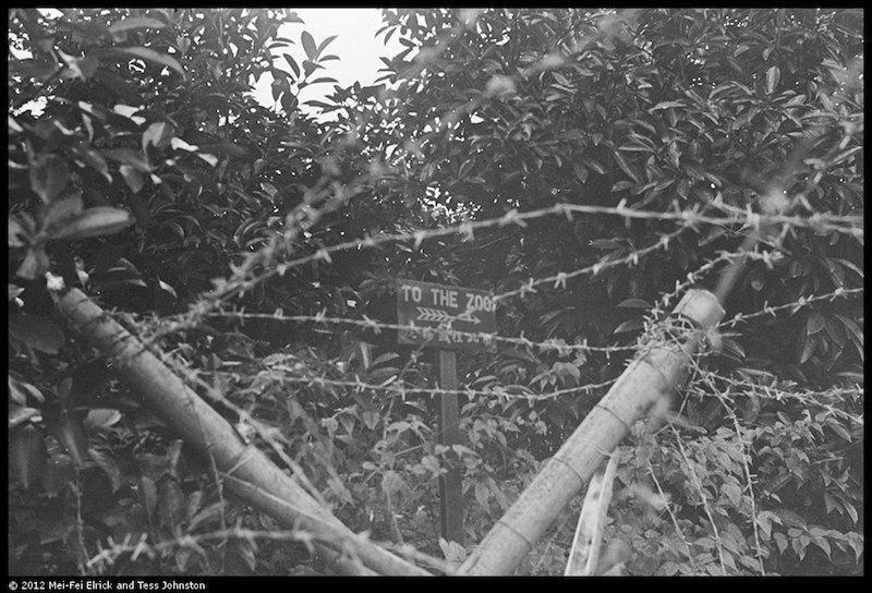 Знак к зоопарку в кустах за колючей проволокой после начала оккупации. Источник: Malcolm Rosholt, Historical Photographs of China