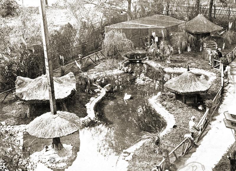 Зоопарк; пруд с лебедями и утками, снятый с крыши клетки с обезьянами. Источник: North-China Sunday News (1929)