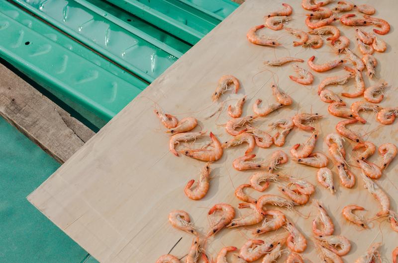 В Макао до сих пор можно найти следы рыбацкого прошлого. Фото: Алина Кочетова