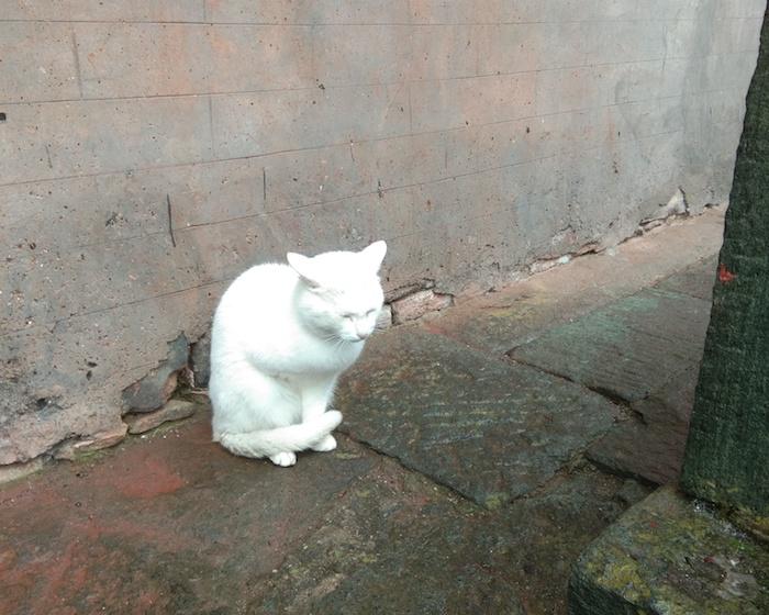 Знаменитая трехлапая кошка у входа в Наньянь